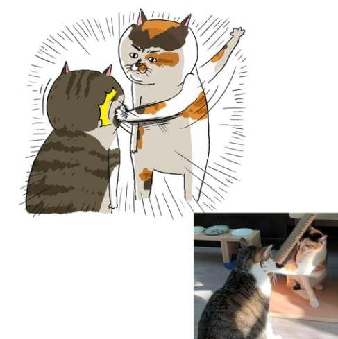 貓室友分享